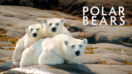 bottom_0001_polar-home-3